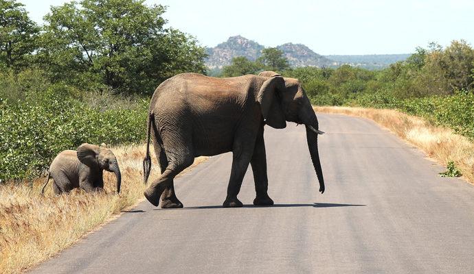 elephants parc kruger
