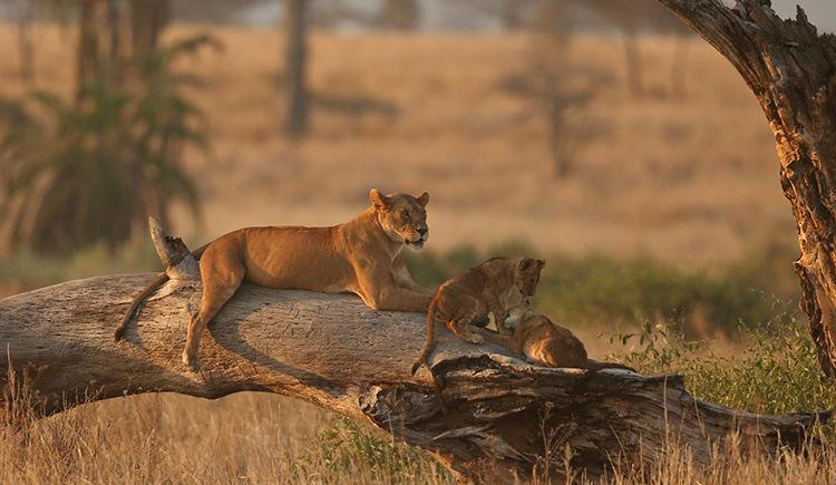 Parc National Kruger