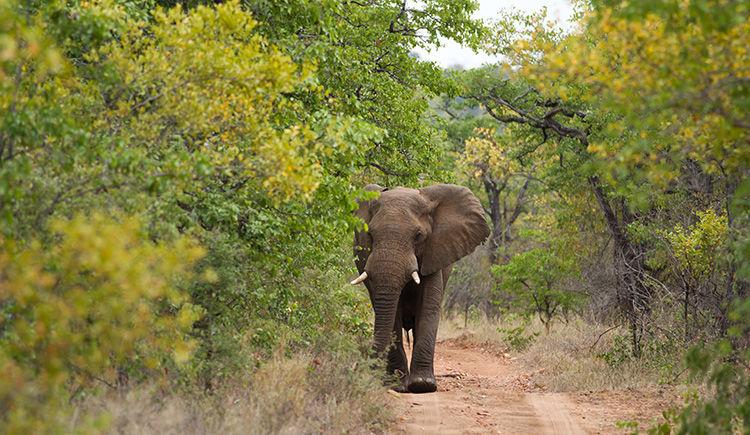 Safari dans le légendaire Parc Kruger