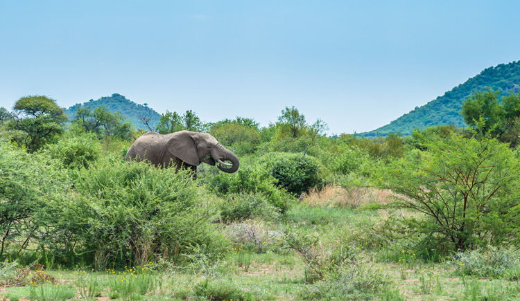 Parc National du Pilanesberg