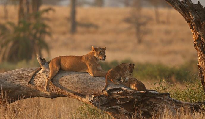 Le Cap & Parc Kruger version top luxe  parc kruger