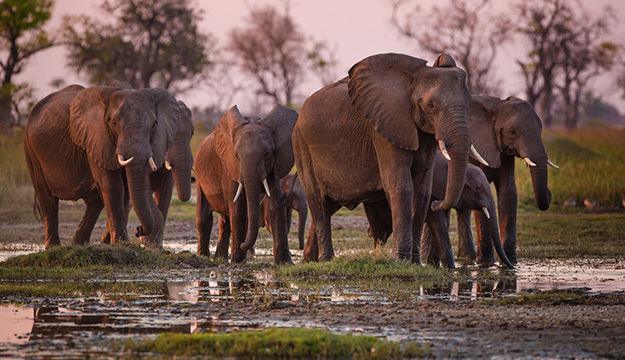 Aventures Botswanaises: du Camp Mobile au Lodge de luxe
