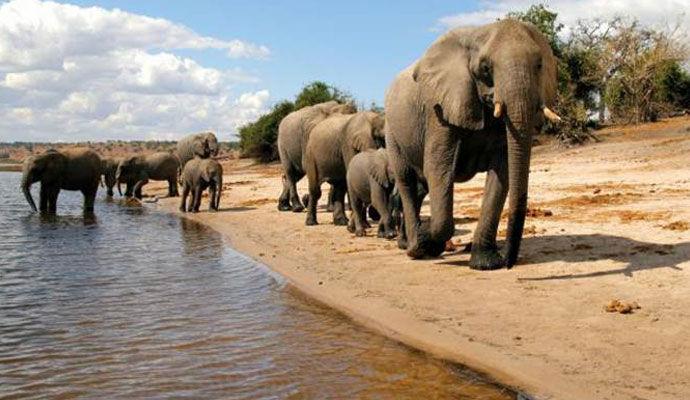 Groupe elephant
