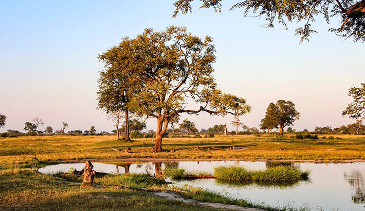Parc National Hwange