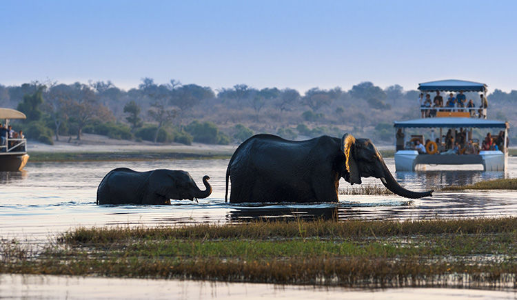 Parc National Chobe