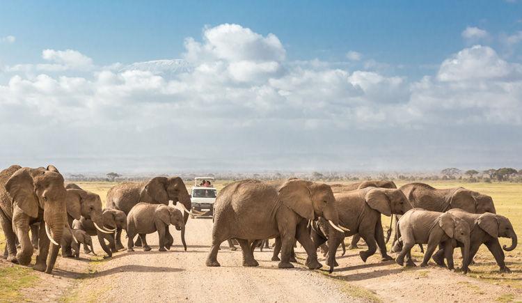 Au-dessus des plaines : le Kenya luxe en avion-taxi