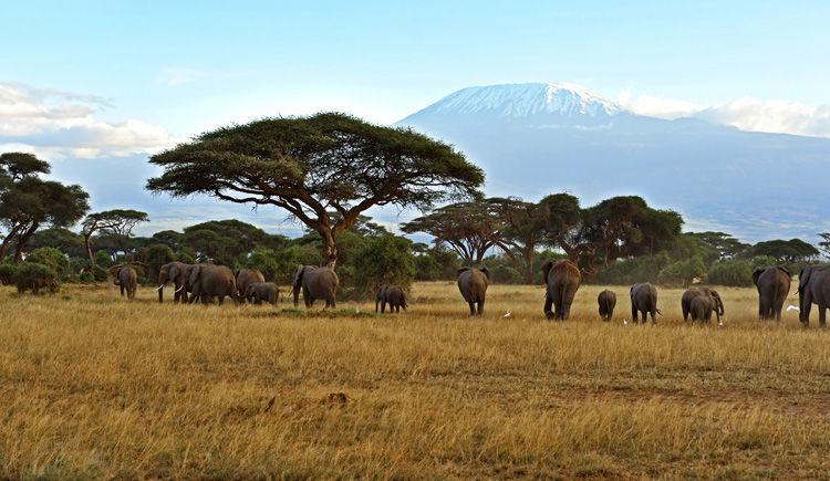 Premiers pas au Kenya 10 jours / 6 nuits