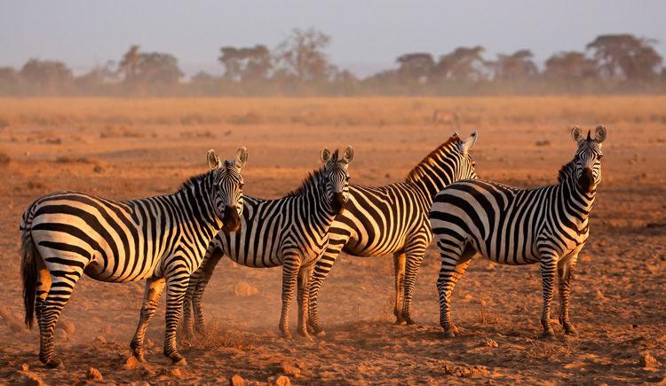 Trésors kenyans : safaris et plage 10 jours / 7 nuits