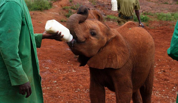 Safaris et vie locale : immersion au Kenya