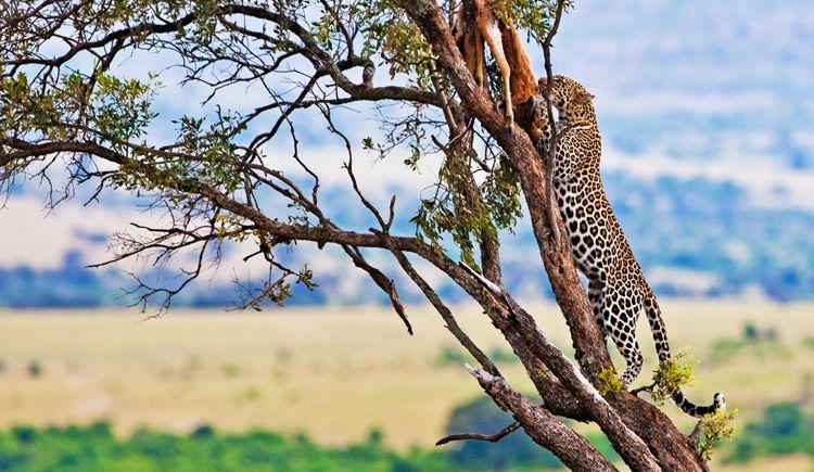 reserve nationale du Masai Mara