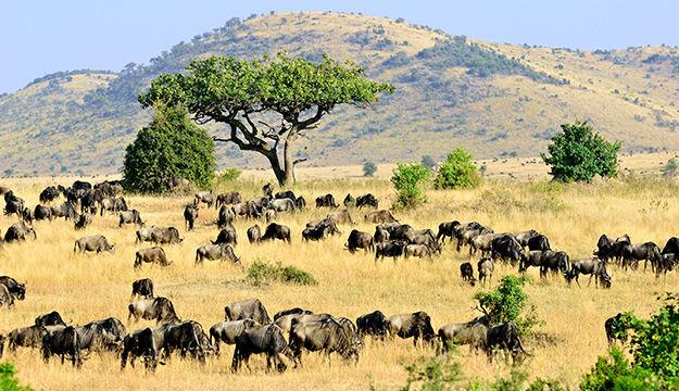 Trésors du Kenya
