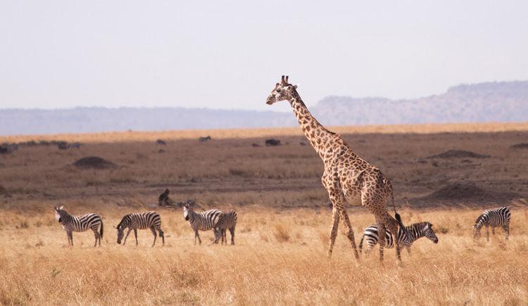 Combiné d'exception : du Masai Mara aux plages de sable fin 9 jours / 6 nuits