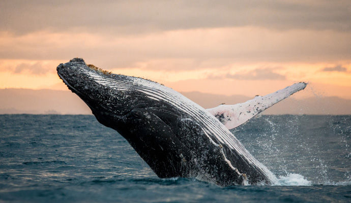 observation des baleines a Sainte Marie
