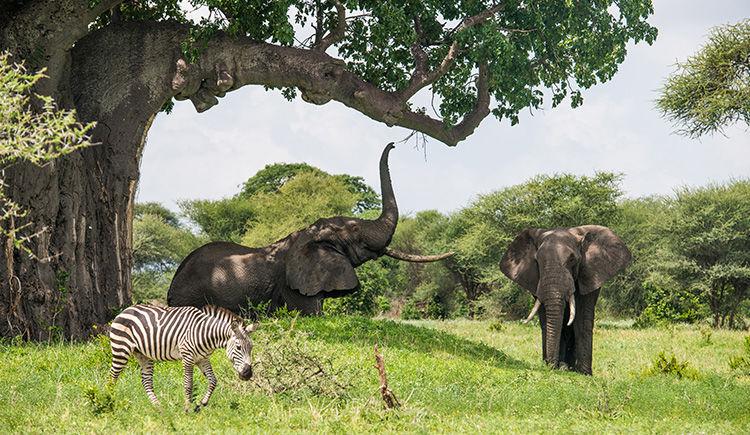 Tanzanie / Zanzibar : entre Grande Migration et farniente sous les tropiques