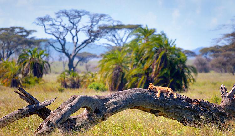 National Serengeti