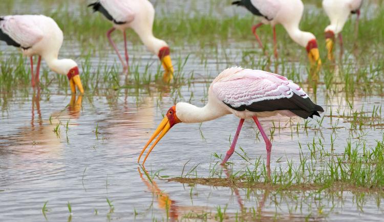 Lac Manyara ouiseau