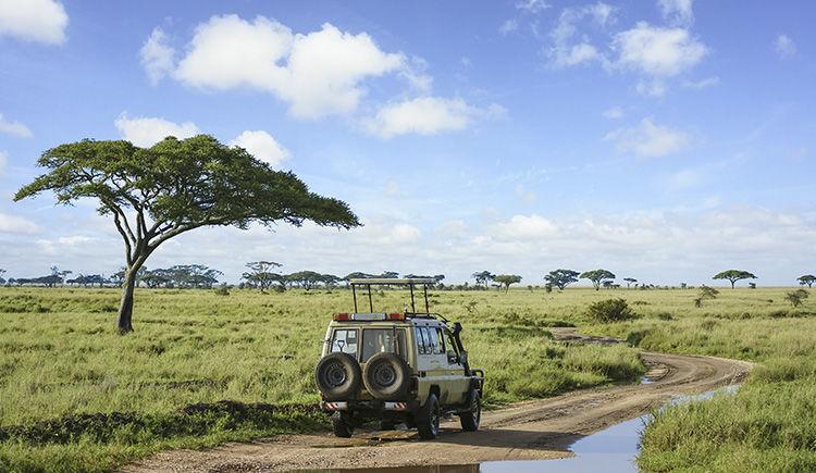 safari au Parc Serengeti