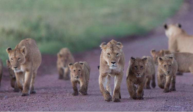 Premier pas en Tanzanie