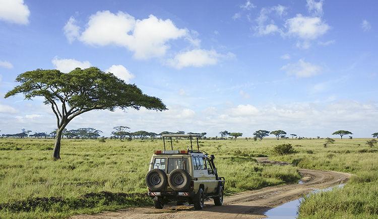 safari dans la Parc National du Serengeti