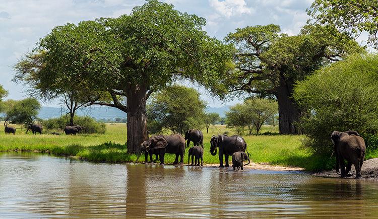 Tanzanie / Zanzibar : Safari catégorie supérieure & Mélia 5 *