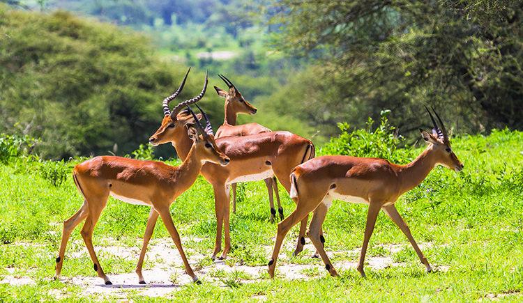 La Tanzanie pour petits et grands : entre savane et mer turquoise