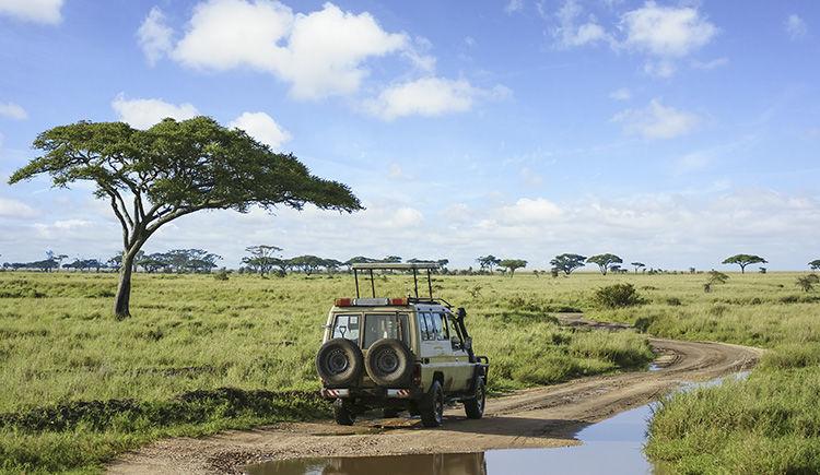 safari dans le Parc National du Serengeti