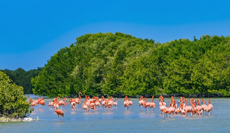 Reserve Naturelle Celestun