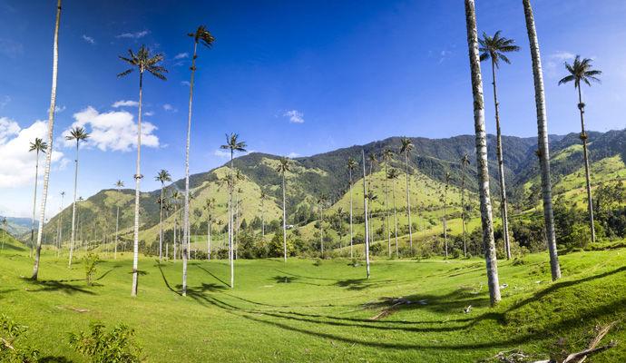 Panoramas Colombiens   vallee de Cocora