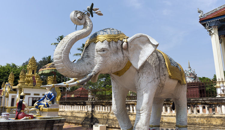 Temple Elephant blanc