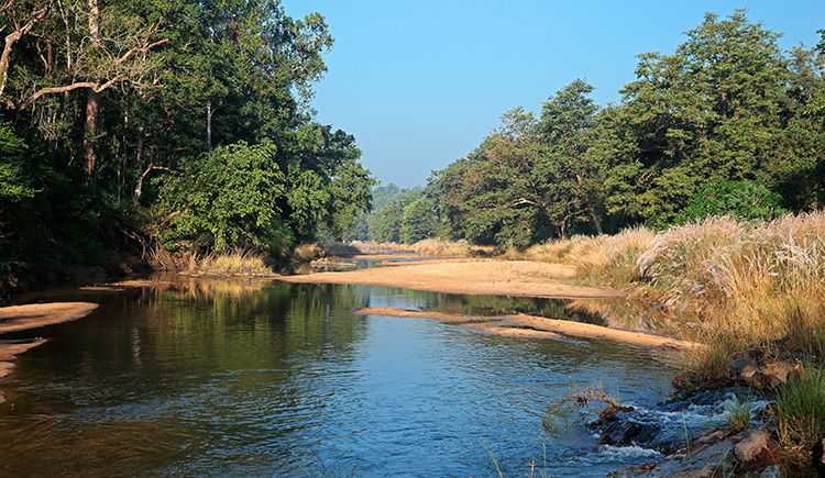 Parc National de Kanha