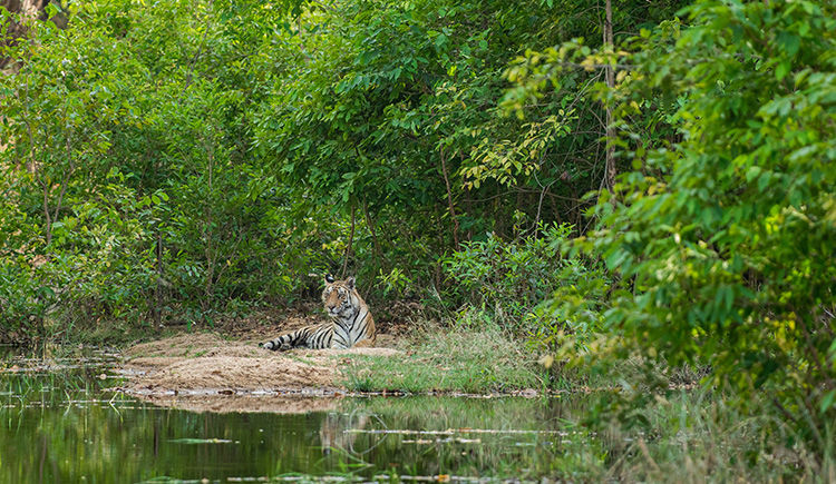 Parc National Bandhavgarh