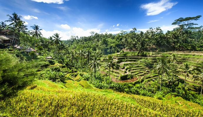 Entre plages et merveilles de Bali