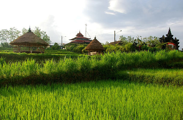 rizieres
