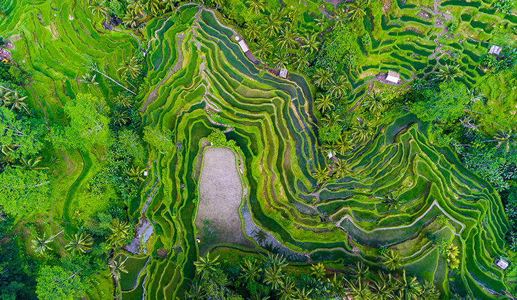 Rizières de Bali et Pemuteran, le paradis caché