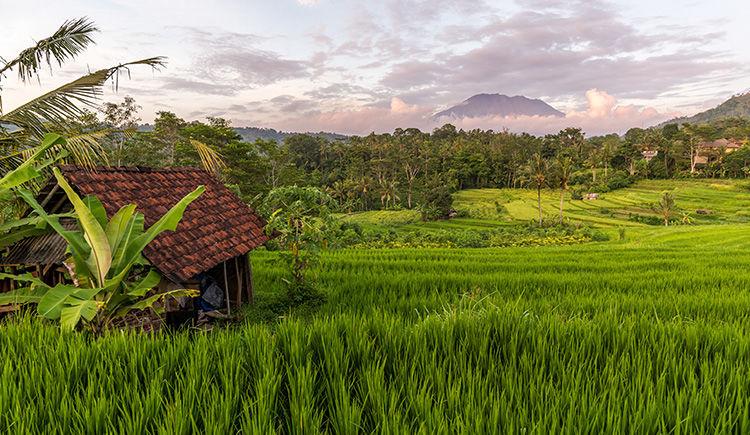 paysage bucolique avec le Mont Agung