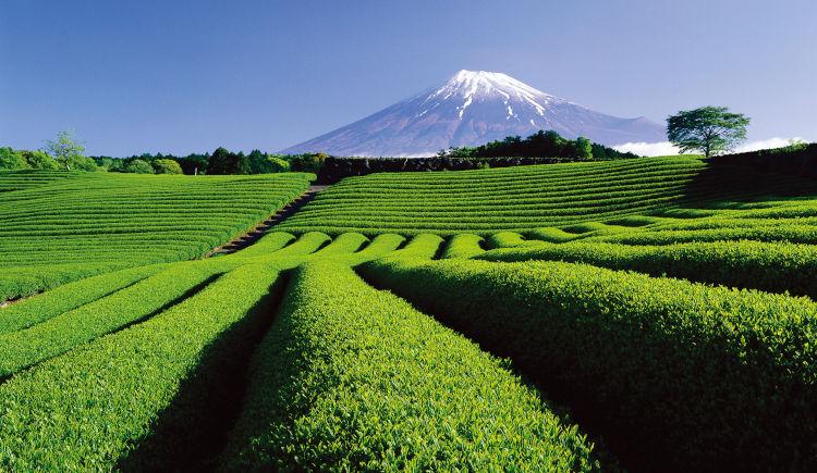 Mont Fuji vue de Shizuoka