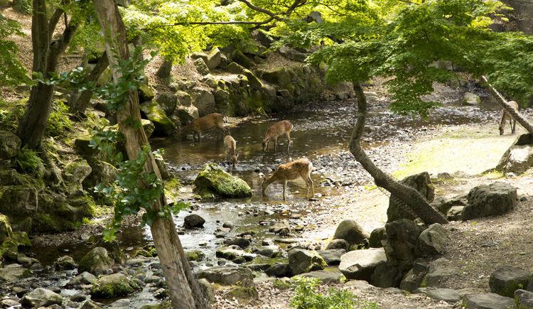 parc aux cerfs
