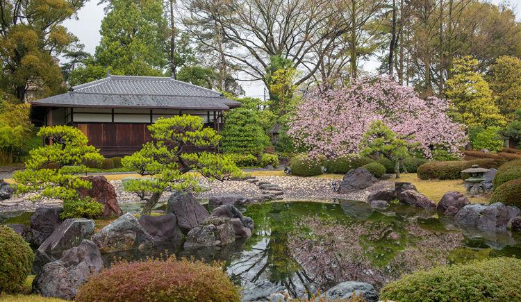 jardin de Ninomaru dans le Chateau de Nijo