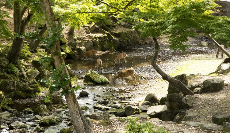 Nara Daims Park