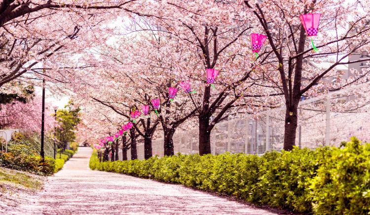 parc Tokyo