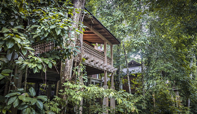 Rainforest Villa