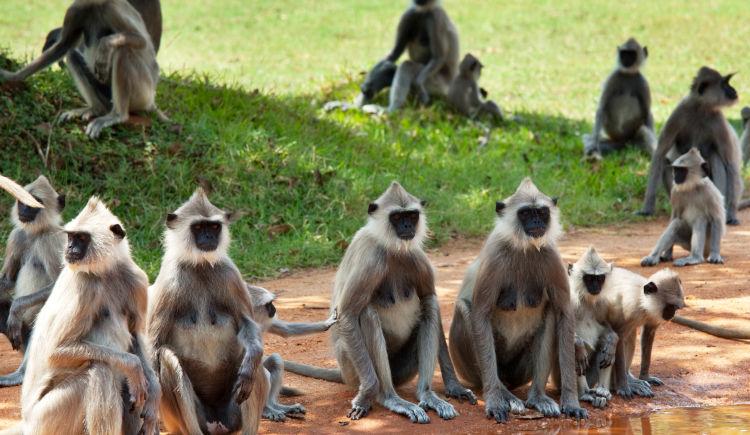 Sri Lanka animaux