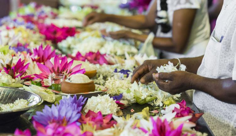 Kandy fleurs