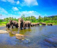 Sri Lanka Maldives - version classique