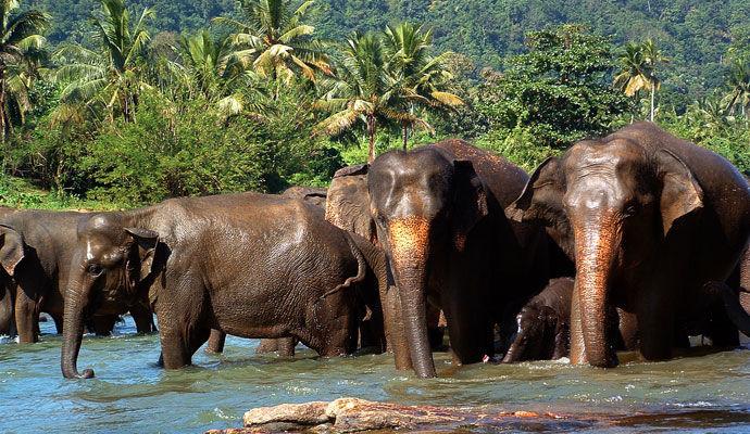 L'essentiel du Sri Lanka en version confort  4 *