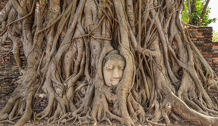 tete de Bouddha de temple Mahathat