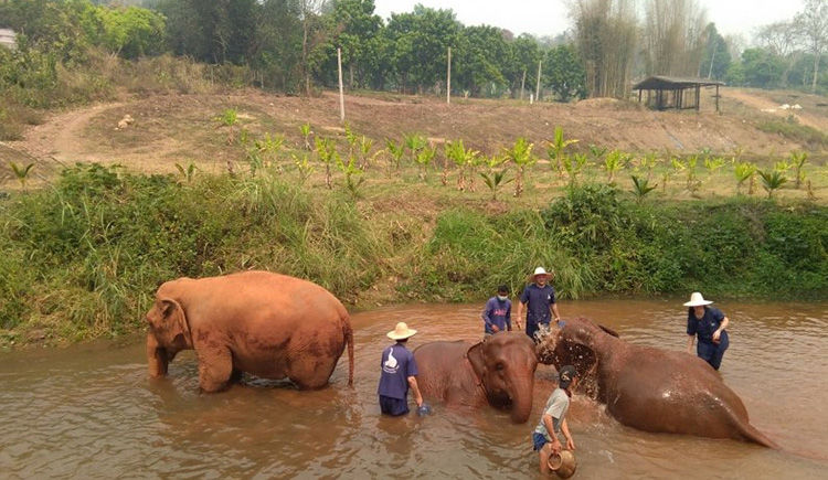 bain des elephants a Baan Chang Elephant Farm