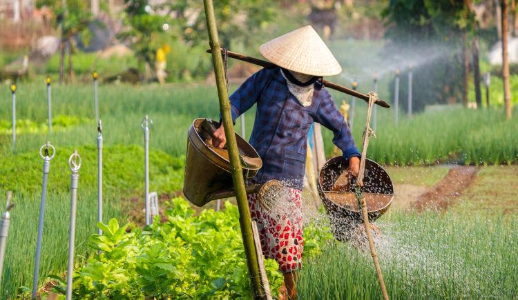 paysan vietnamien