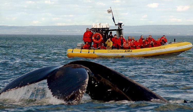 croisiere observation des baleines