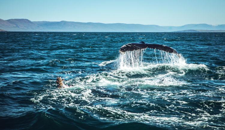 mer islandaise